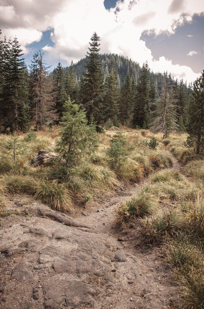 Trail through a lava field