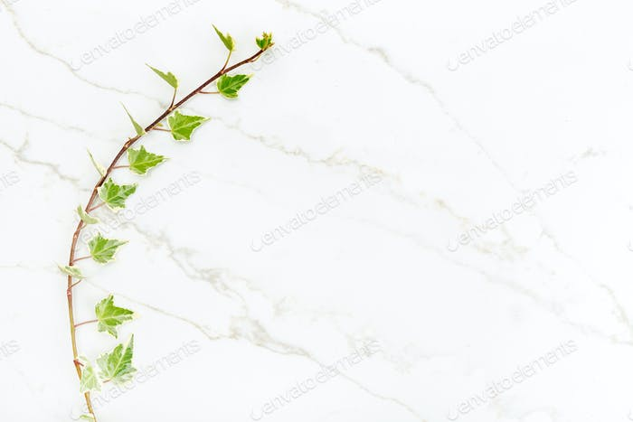 Green ivy leaves on white marble background