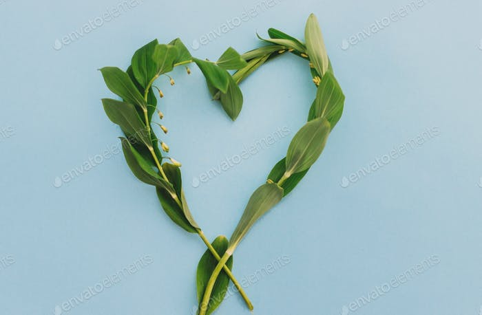 Green heart shape made of wildflower on blue paper background, flat lay with space for text