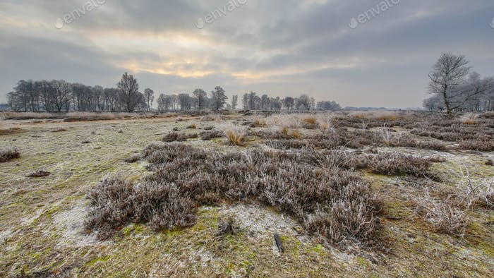 Winter sunrise over frosty heathland