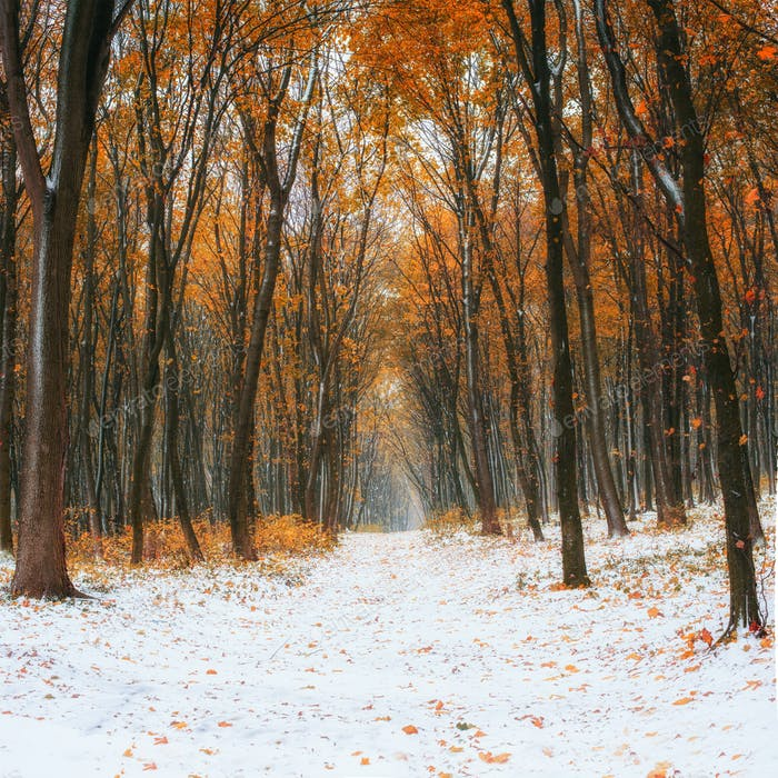 First snow in the forest.