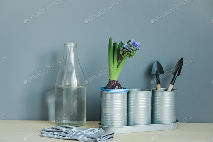 still life of hyacinth mix plant and gardening tools in metal pot, gloves, glass bottle with water