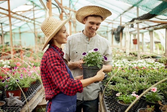 Guy and girl gardeners in a straw hats holds and looks at the pot with flower in greenhouse on a