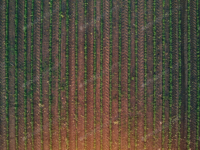 Aerial view of soybean field, drone pov top view