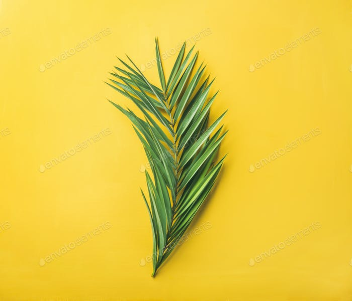 Green palm branch over bright yellow background, top view