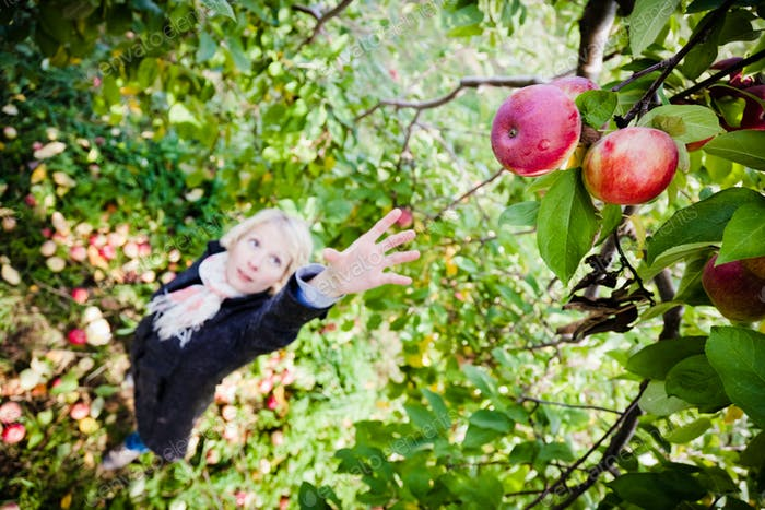 Girl reaching for a branch with apples