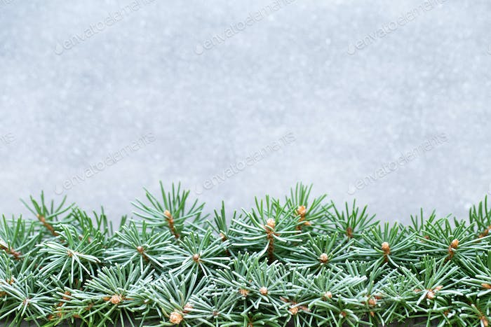 Christmas tree branches on a shiny background.