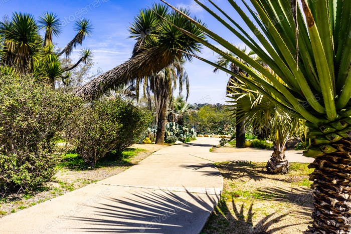 Paved alley lined up with cacti and palm trees, San Diego, California