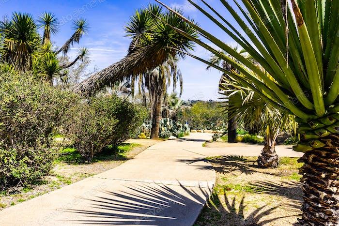 Gepflasterte Gasse mit Kakteen und Palmen, San Diego, Kalifornien