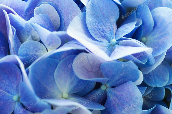 Beautiful hydrangea floral