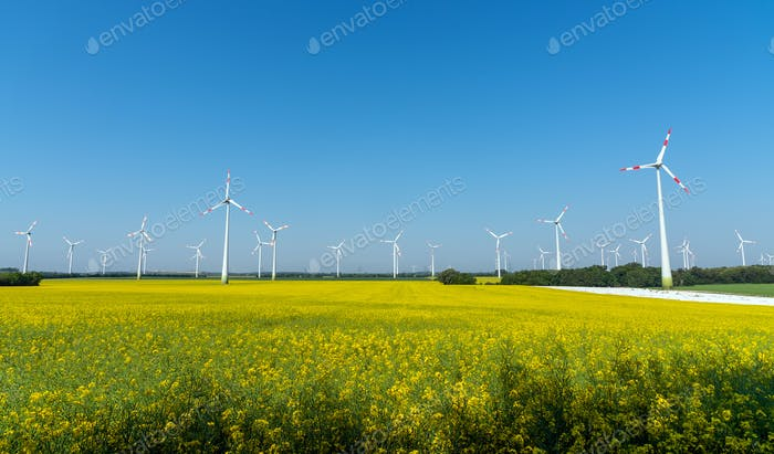 Yellow blooming oilseed rape with wind energy plants