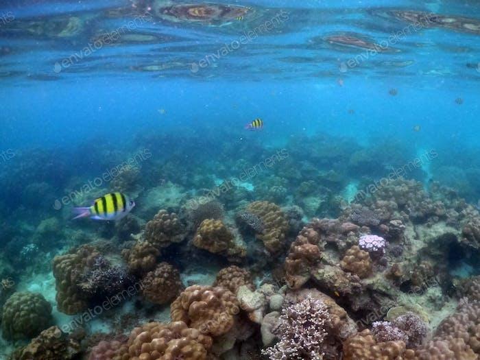 Unterwasser-Meereslandschaft von Korallen und Algen im Ozean.