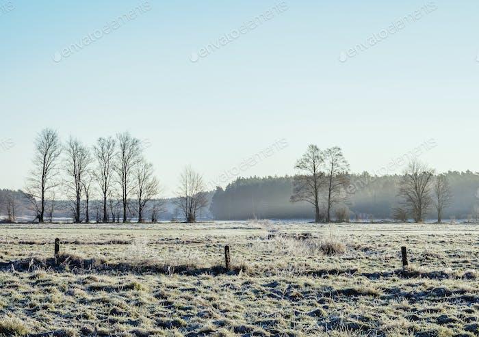 Morning Frost in Gorajec, Poland