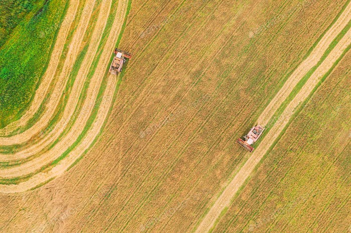 Aerial View Of Rural Landscape. Two Combines Harvesters Working In Field, Collects Seeds. Harvesting