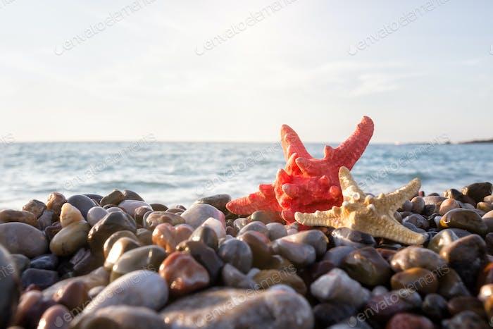 Two starfish on the seashore