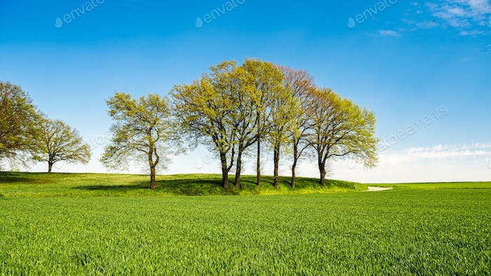 Green meadows with blue sky and clouds background