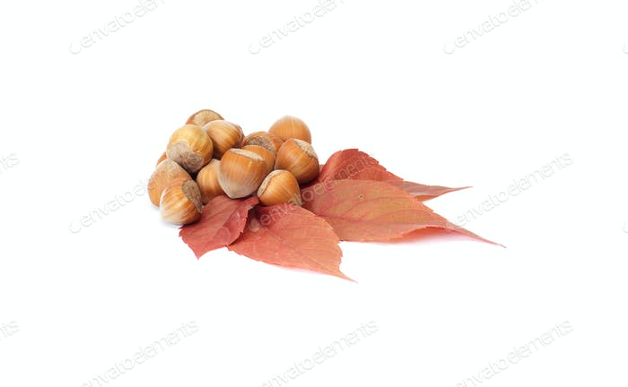 Colorful, autumn leaves and nuts on a white.
