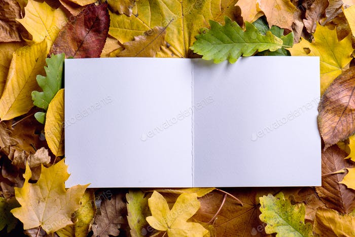 Autumn leaf composition greeting card studio shot wooden back autumn leaf composition greeting card studio shot wooden back m4hsunfo