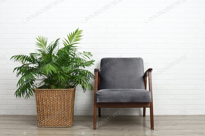 Comfortable armchair and beautiful houseplant
