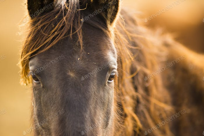 Wild Horse Face Portrait Oregon Bureau of Land Management