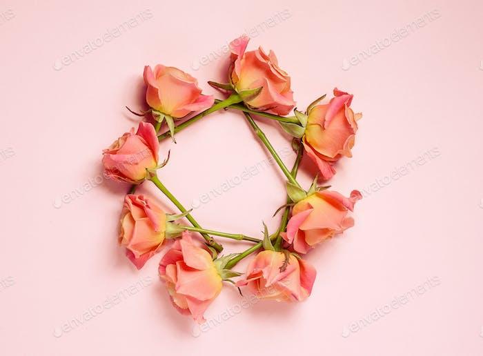 rosa Rosen auf rosa Hintergrund