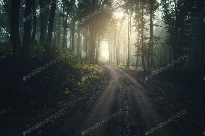 Road through dark mysterious forest with fog