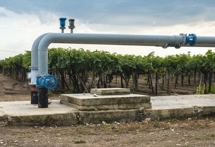 Watering pipes and vineyard.