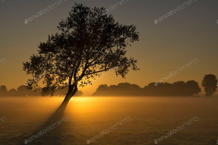 Stimmungsvoller Sonnenaufgang in der Nähe von Wijngaarden
