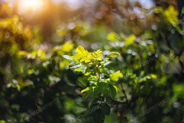 funkelnde Lichter lebendige Farbe verschwommen bokeh Frühling aus Blatt zurück