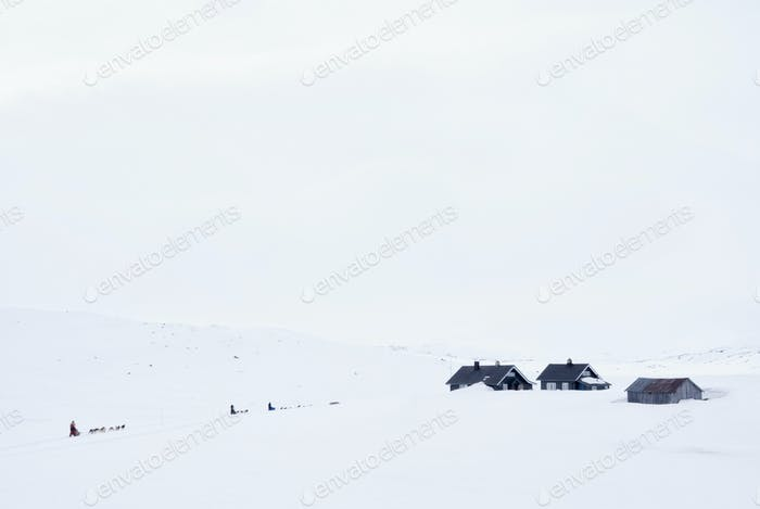 Dog sled on the Hardangervidda