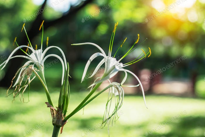 Flores blancas con luz solar