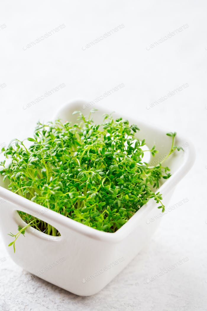 Sprouts of garden cress ready to eat