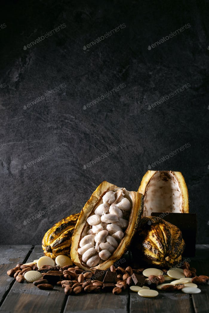 Cacao fruit decorated with fresh and dry cacao beans