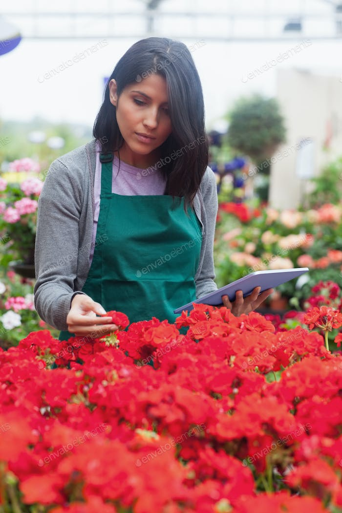 Woman holding a tablet while checking flowers in garden centre