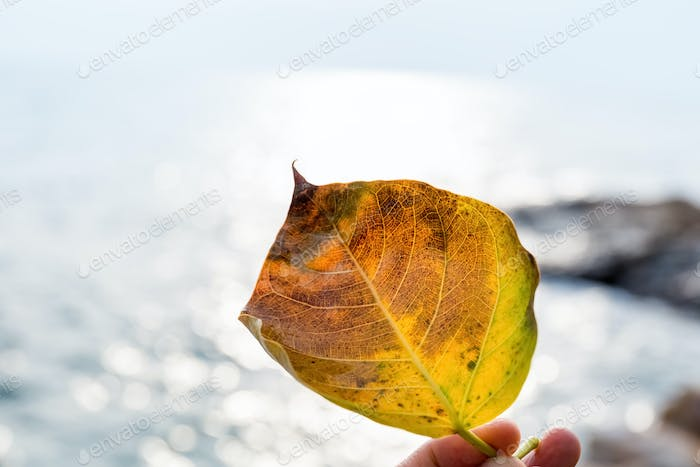 a leaf closeup with sea