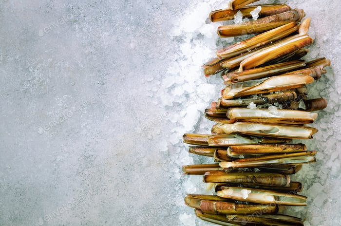 Bundle, bunch of fresh razor clams on ice, grey concrete background. Copy space, top view, banner