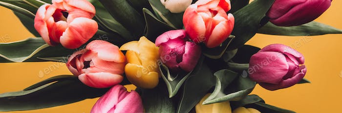 Colorful Classic Tulips