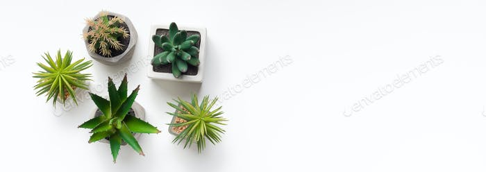 Small succulent and cacti plants in pots on background