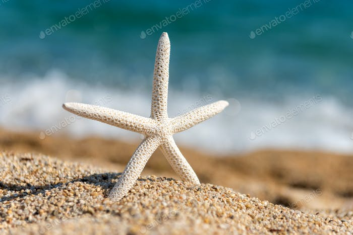 Starfish seashells on the sand by the sea on a sunny day