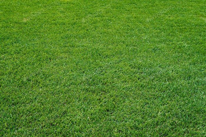 Textura de hierba verde. Pradera verde