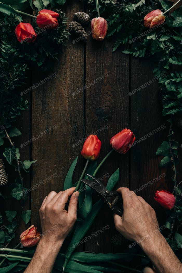 POV male hands cutting tulips.