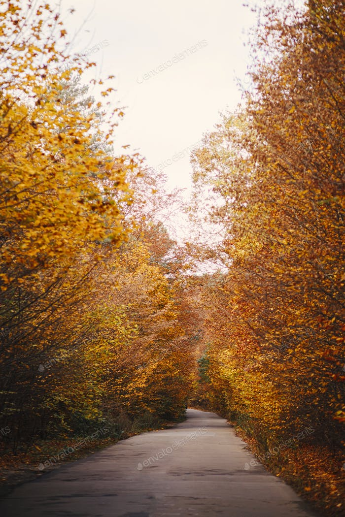 Beautiful autumn road in autumn woods. Autumnal background. Country road in fall forest