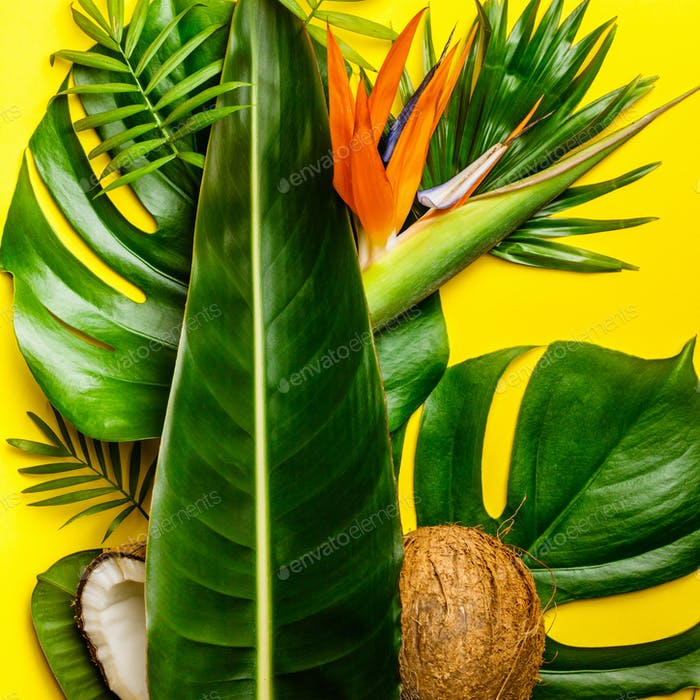 Tropical leaves on yellow background