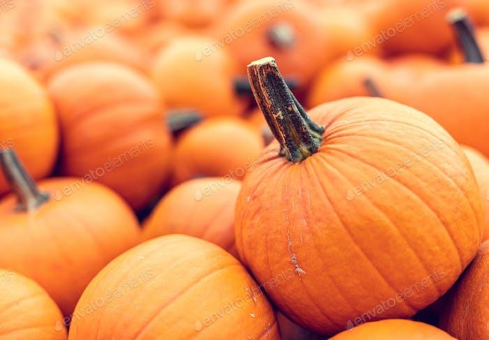 Halloween pumpkins background.