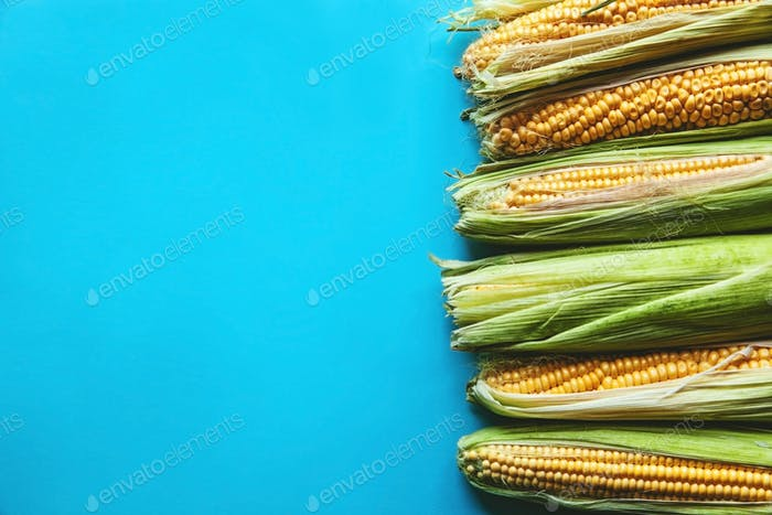 corn on a blue background, healthy food, fruit