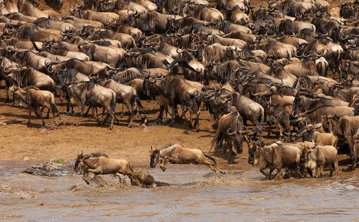 Wildebeest migration in tanzania and kenya90