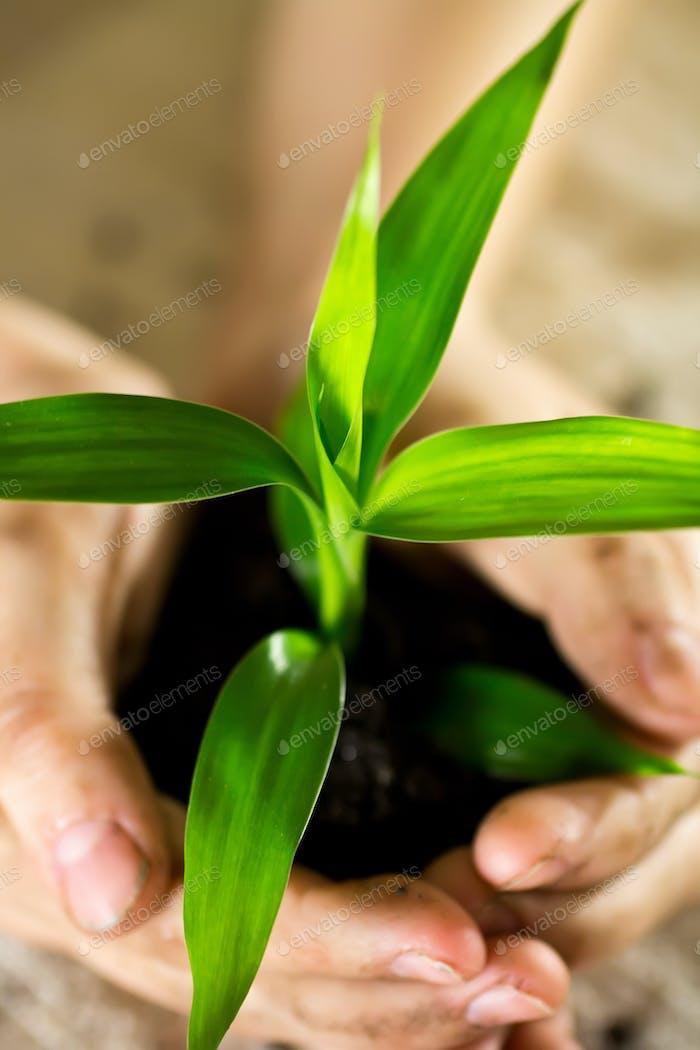 Bamboo of hand.