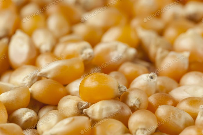 Organic Raw Yellow Corn Kernels