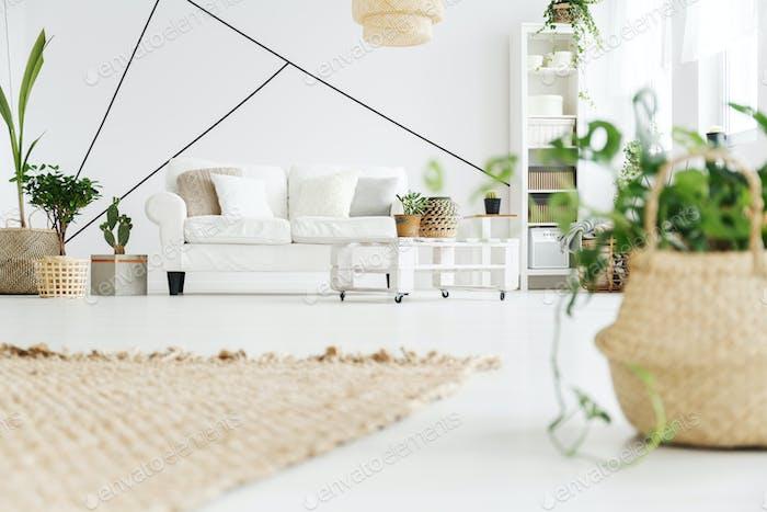 Растения в комнате