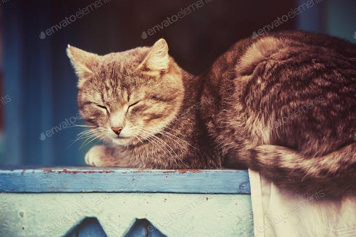 Graue Katze ruhen